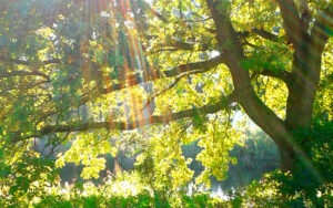 Waldbaden - entspannend, belebend, heilsam