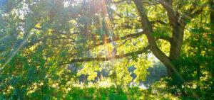 Waldbaden – die Wirkung auf Körper und Geist