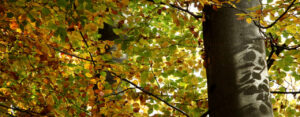 Waldbaden – kurz und knapp erklärt